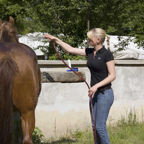 pferdewirtschaftsfacharbeiter_1